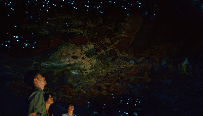 Glow Worm Cave Tour Gold Coast