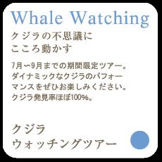 Whale Waching