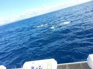 0830 whale mum & child