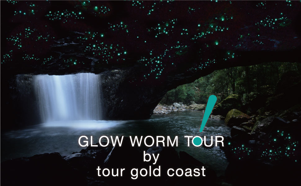 Glow Worm Tour - Tour Gold Coast