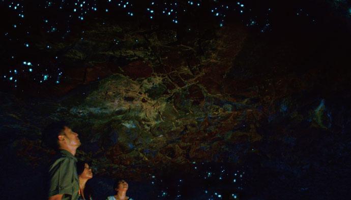 Glow Worm Tour From Brisbane