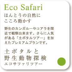 Eco Safari