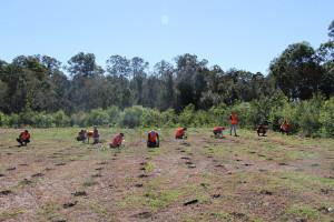Greenfleet Planting 3